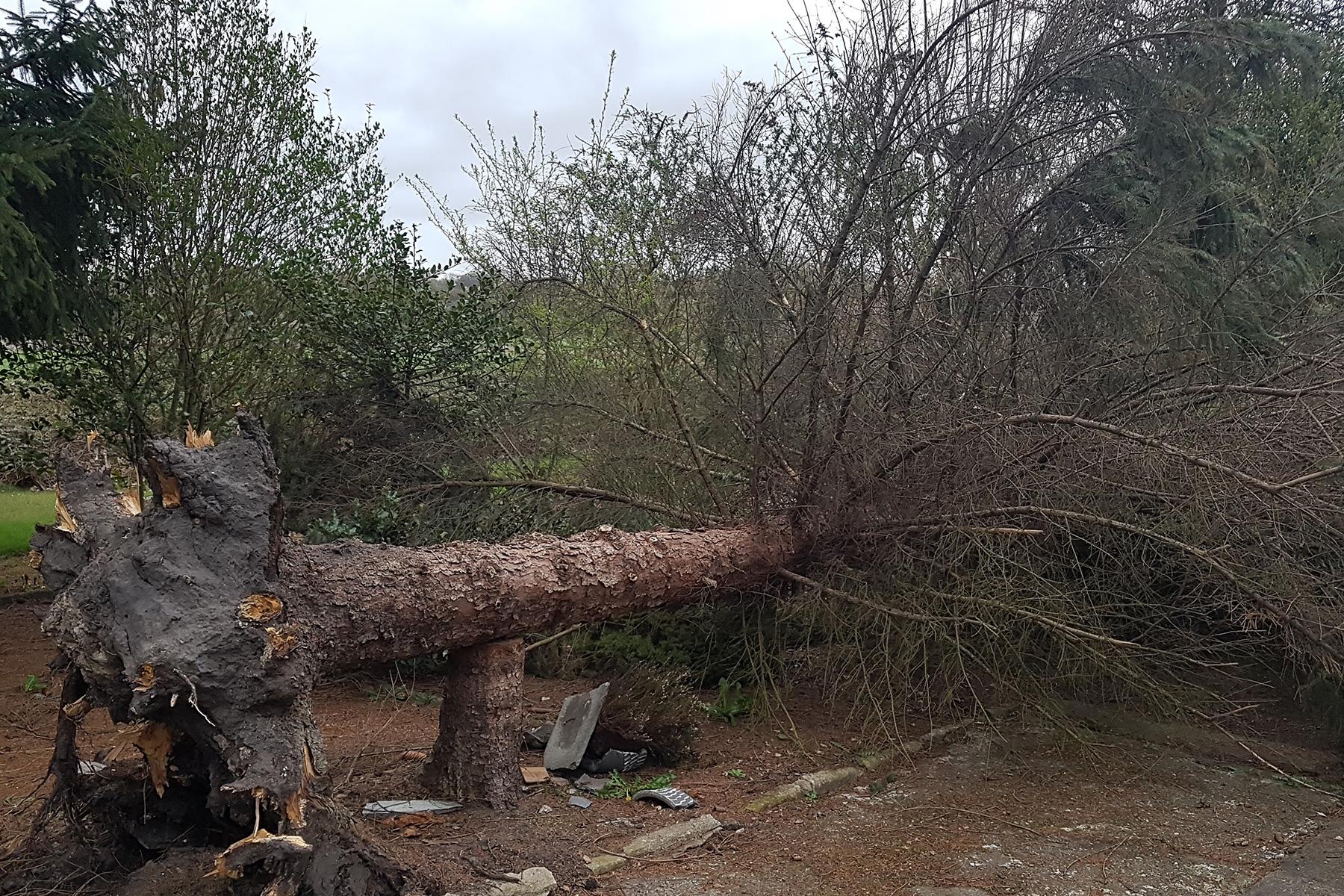 Baumdienst Baumpflege Sturmschadenbeseitigung Wojtkowski