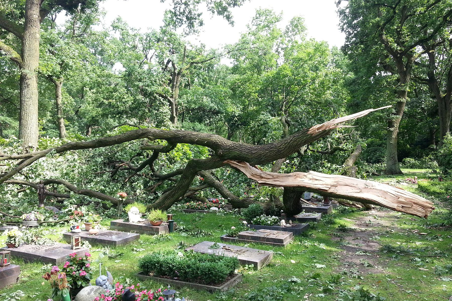 Baumdienst Baumpflege Sturmschadenbeseitigung