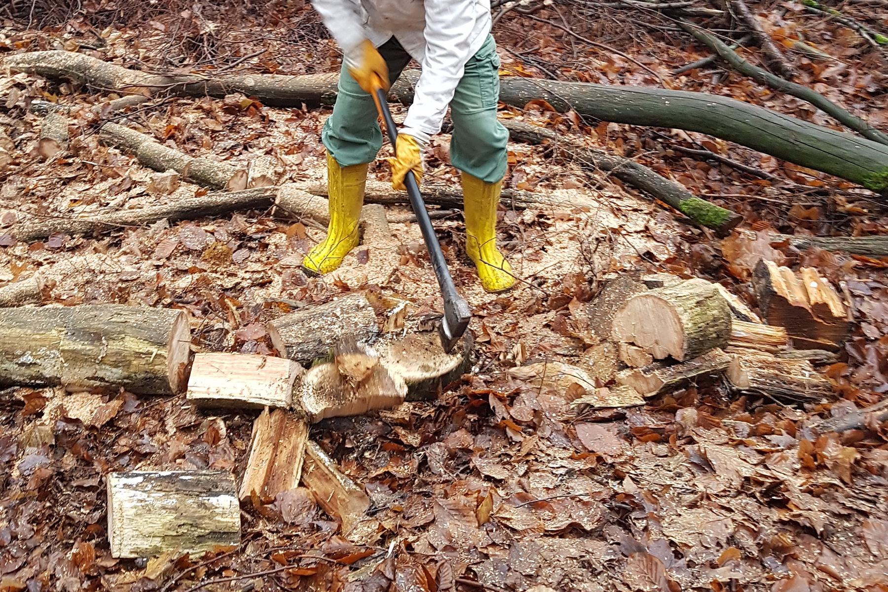 Baumdienst Baumfällung Brennholz
