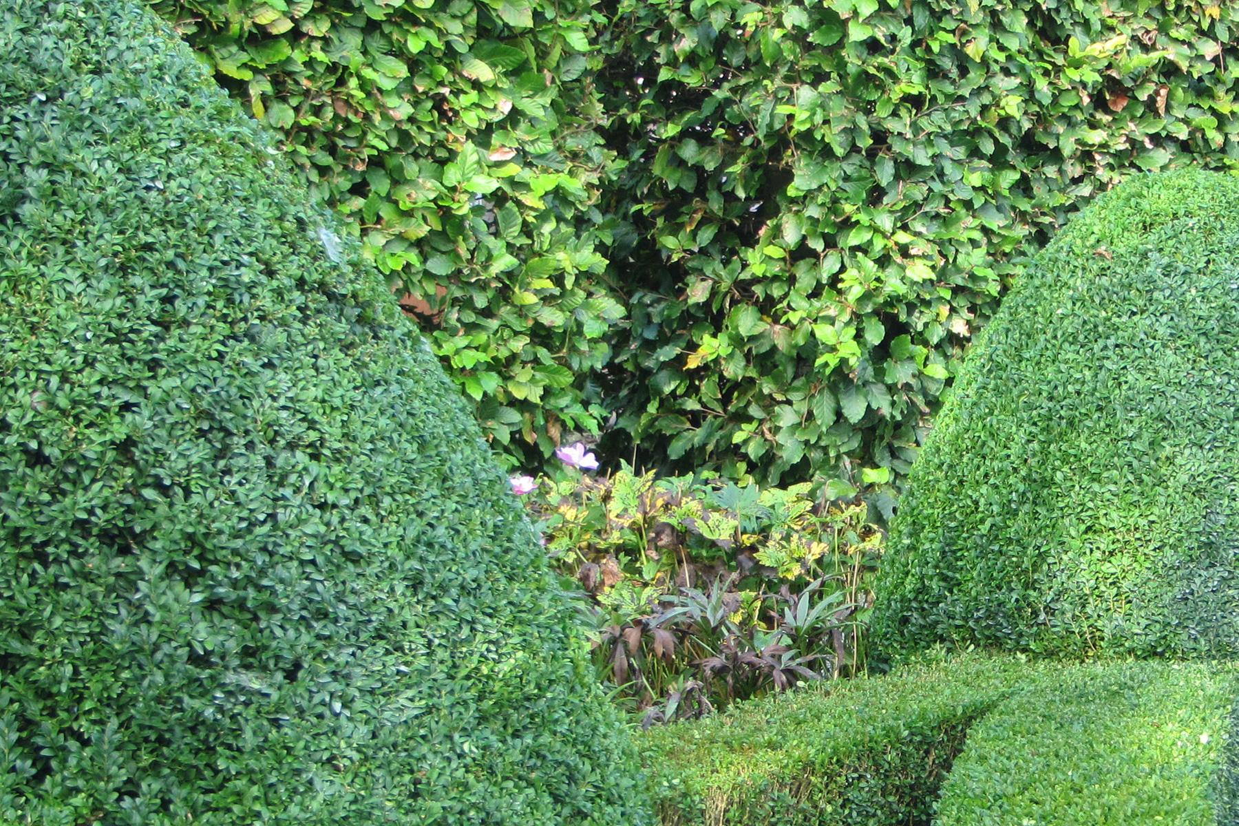 Gartenpflege Wojtkowski Heckenschnitt Formschnitt Buchsbaum