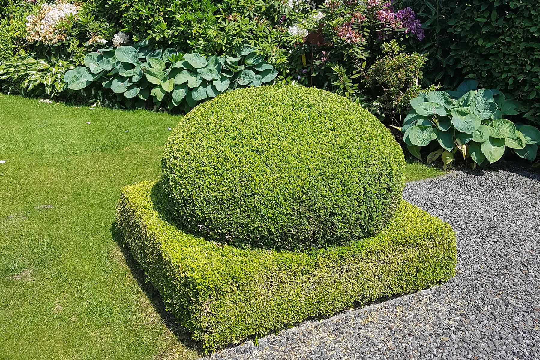 Gartenpflege Heckenschnitt