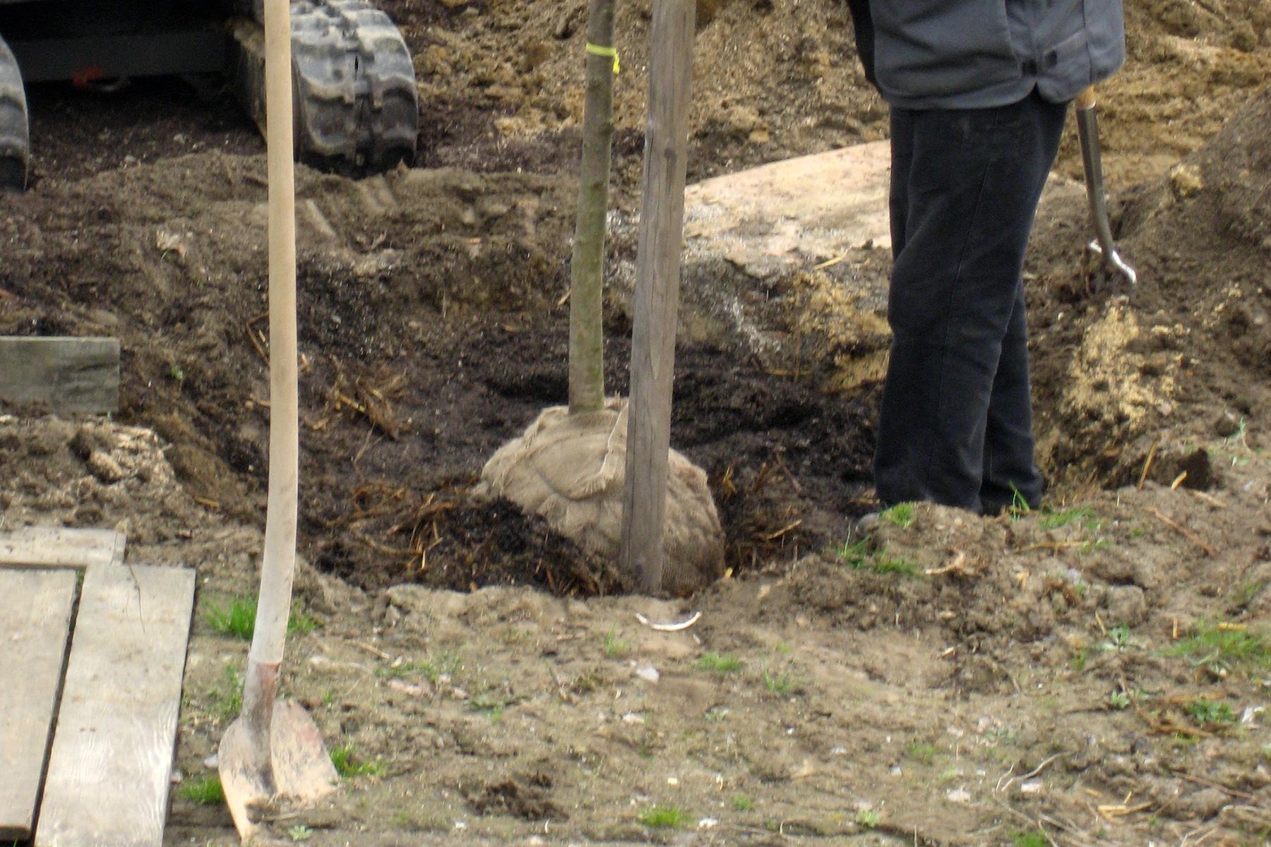 Gartenpflege Wojtkowski Baumpflanzung