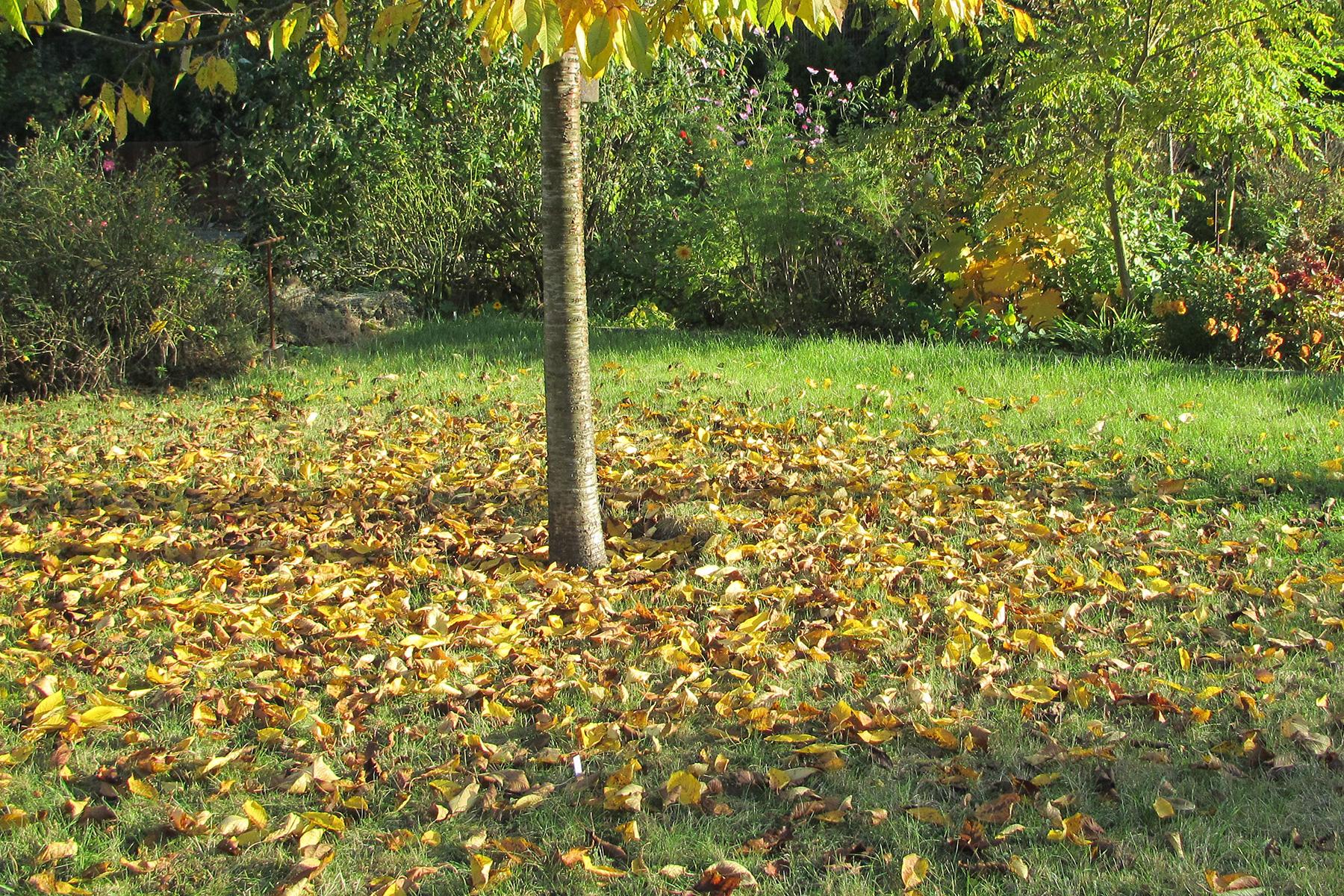 Gartenpflege Rasenpflege Laubentfernung
