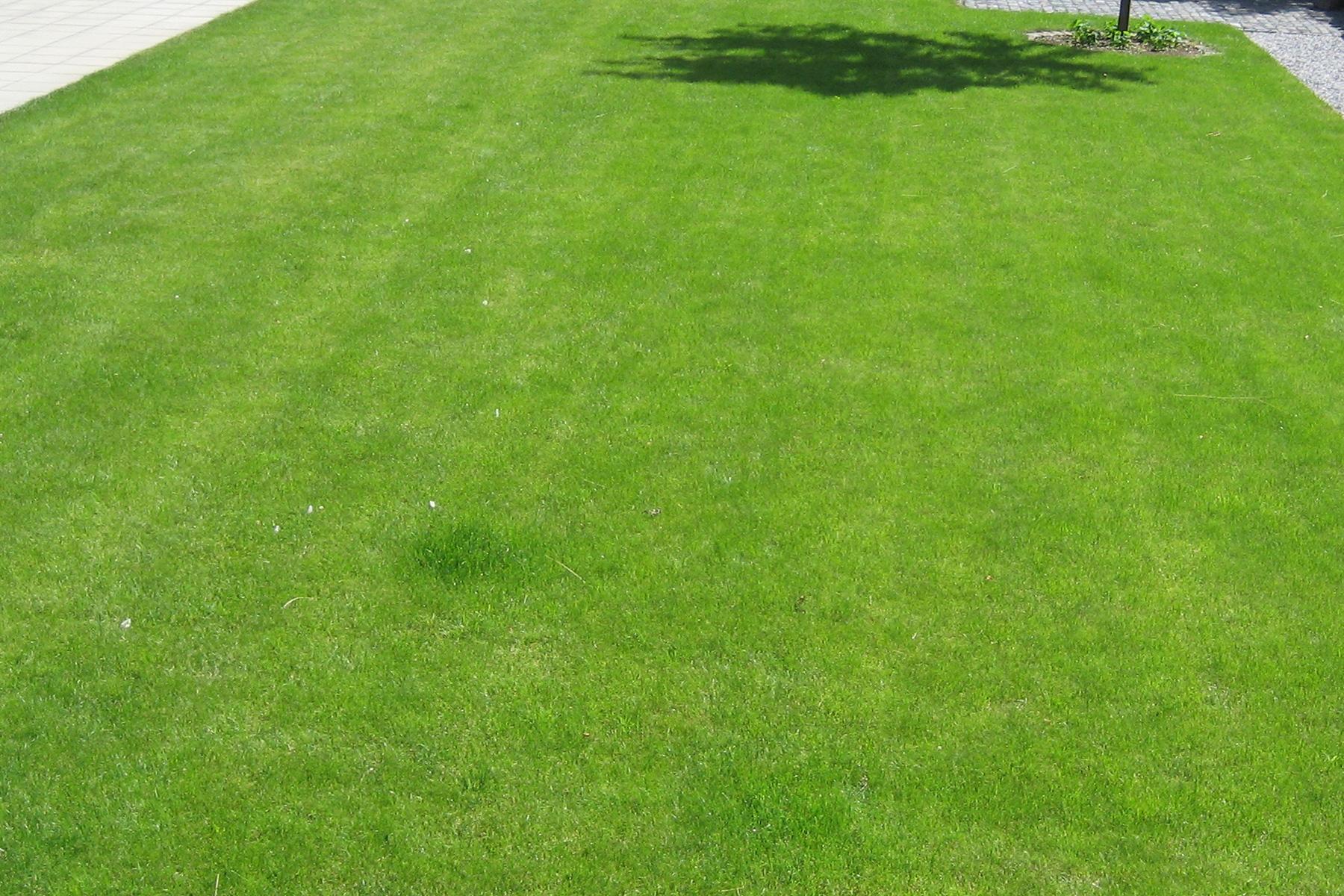 Gartenpflege Rasenpflege