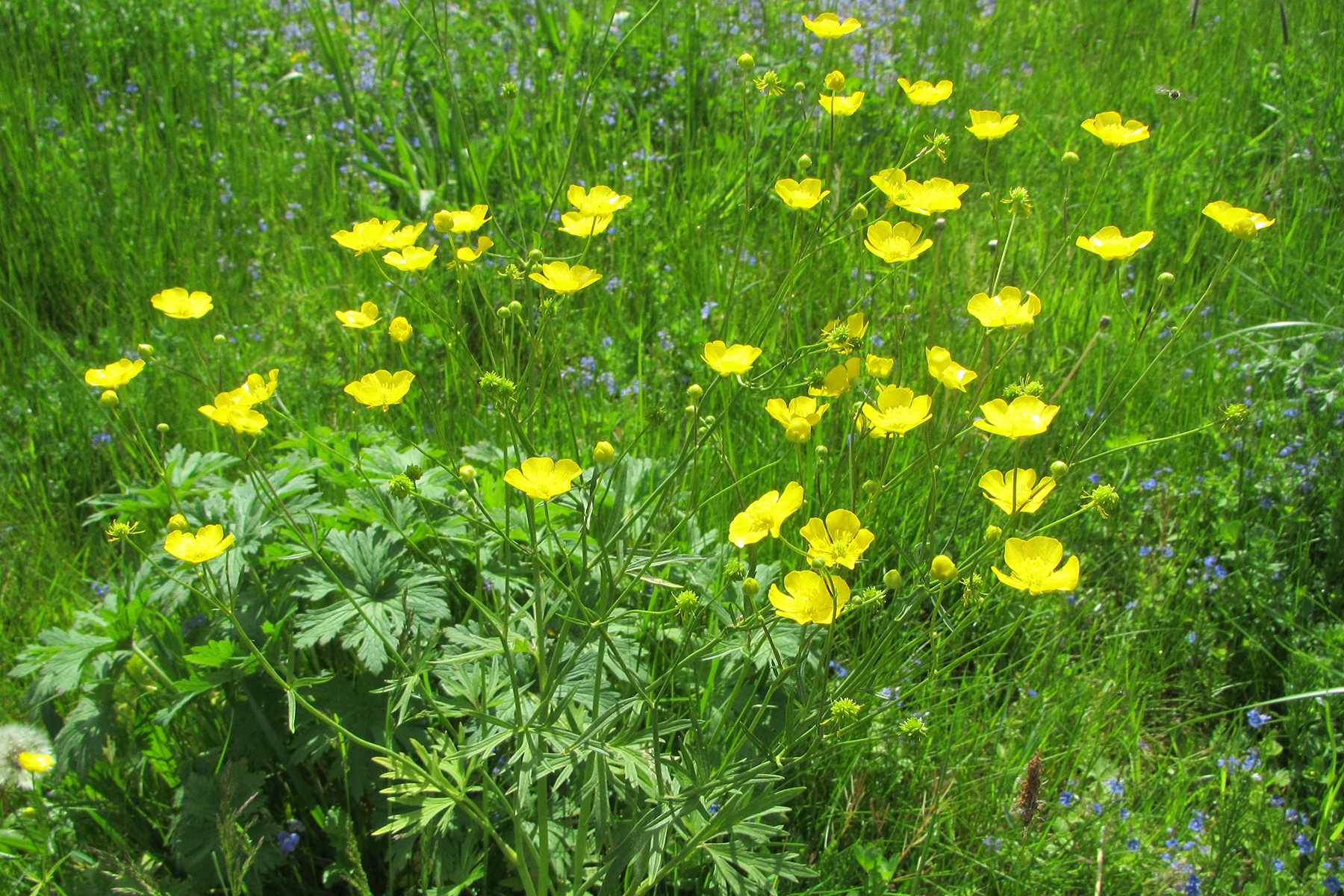 Gartenpflege Blumenwiese