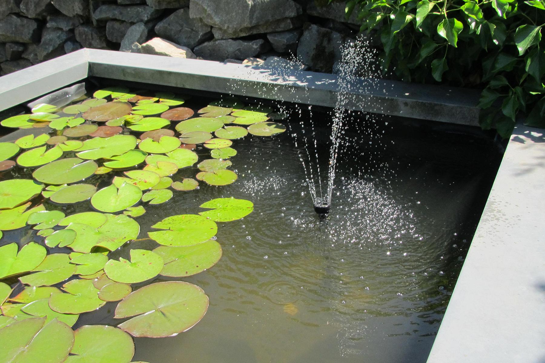 Teichpflege Seerosenbecken