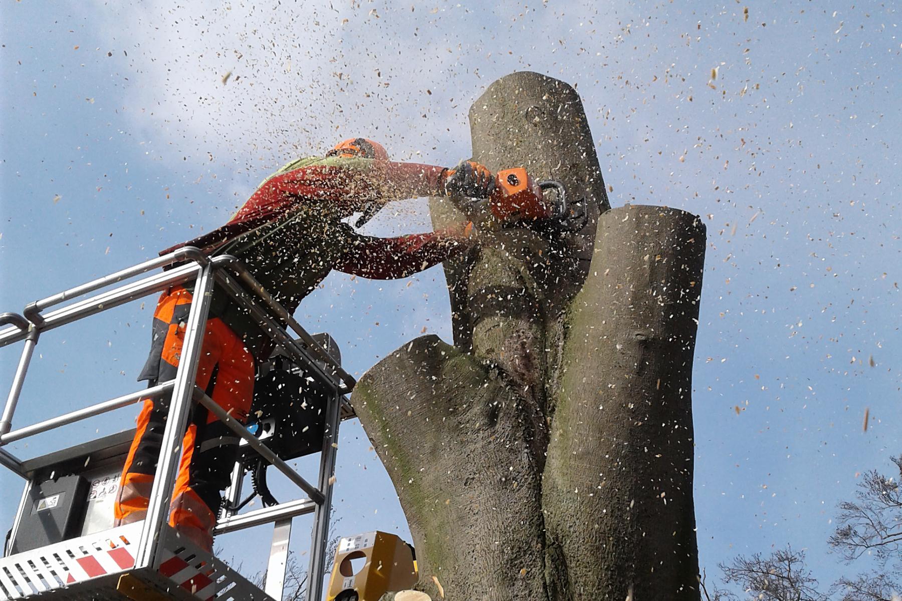 Baumpflege Wojtkowski Rückschnitt eines Baumes nach Sturmschaden